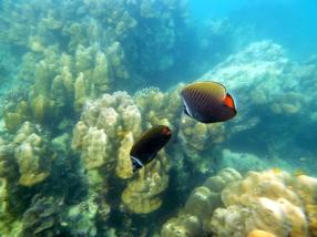 faune et flore Phi Phi Island